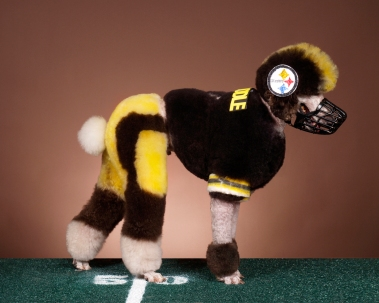 """Cosley Football Player (Roethlispoodle),"" by Ren Netherland/Animal Photography, dog groomed by its owner Justine Cosley, photograph, 2009."